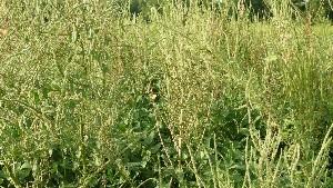 Weed Management Program Profiles