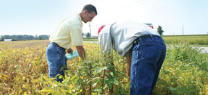 Weed Expert: Adding A Second <b>Herbicide</b> Not Always Easy | CropLife