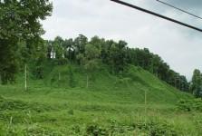 Kudzu Covered Hill
