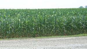 Expert: Crop Input Prices A Mixed Bag