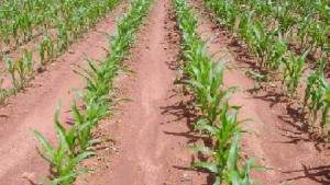 Bayer CropScience Introduces Sivanto Insecticide