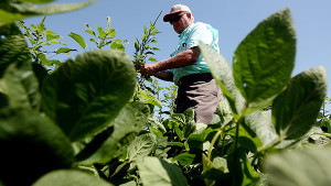 PPO Resistant Pigweed Hits The Mid-South