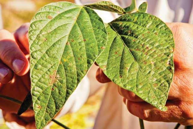 New FMC Website Provides Season-Long Updates On Fungicide