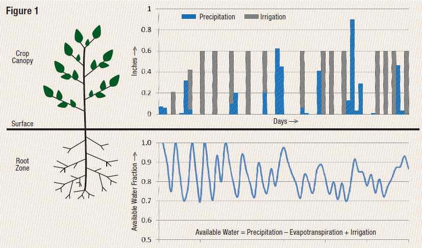 Irrigation Schedule Graph