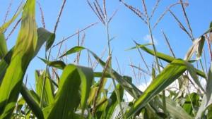 Bayer Posts More Than 300 Glyphosate Safety Study Summaries Online