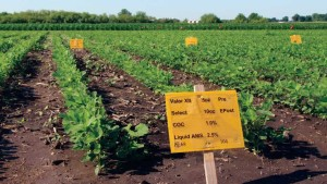 Valent's Zeal SC Miticide Receives EPA Approval