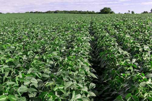 Arysta LifeScience Introduces TEPERA Brand Fungicides
