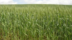 Formulation Technology Matters with High-Activity Sulfonylurea Herbicides