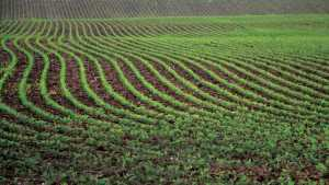 New Soil Adjuvant Helps In Resistant Weed Control