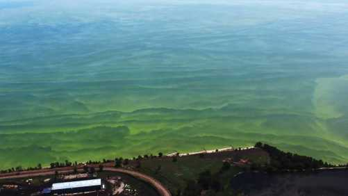 Lake Erie Algae
