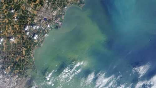 Algal blooms