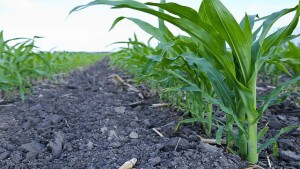 INNVICTIS CROP CARE Introduces New TREVO TRZ Fungicide