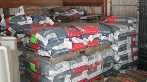 Seed corn bags in storage