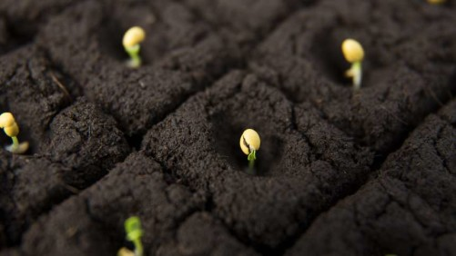 Seedling Closeup