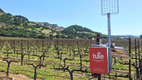 The Tule ET sensor in wine grapes.