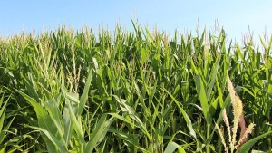 Key Considerations for Fall Nitrogen Applications