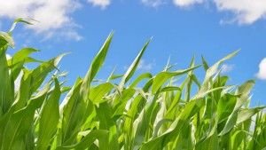 Syngenta Signs Long-Term Licensing of NRGene's Data Analytics Platform