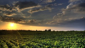 Soybeans Officially Supplant Corn as Top Crop