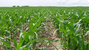 Report Examines Effectiveness of U.S. Crop Protection Channel