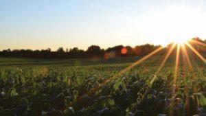 Koch Agronomic Services Expands SUPERU Fertilizer Production Capacity