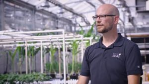 Biologicals Can Help Increase Phosphate Availability