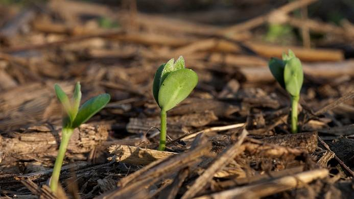 Plant Availability of Potassium in Soil Minerals: What's Happening Near the Roots?
