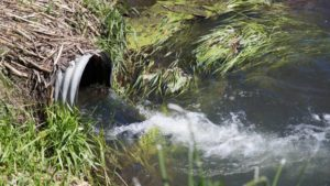 New System Could Remove Two Water Pollutants from Ag Fields
