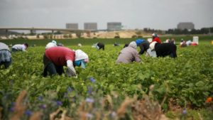 Greenhouse Grower: Our Agricultural Guest Workers Deserve Better