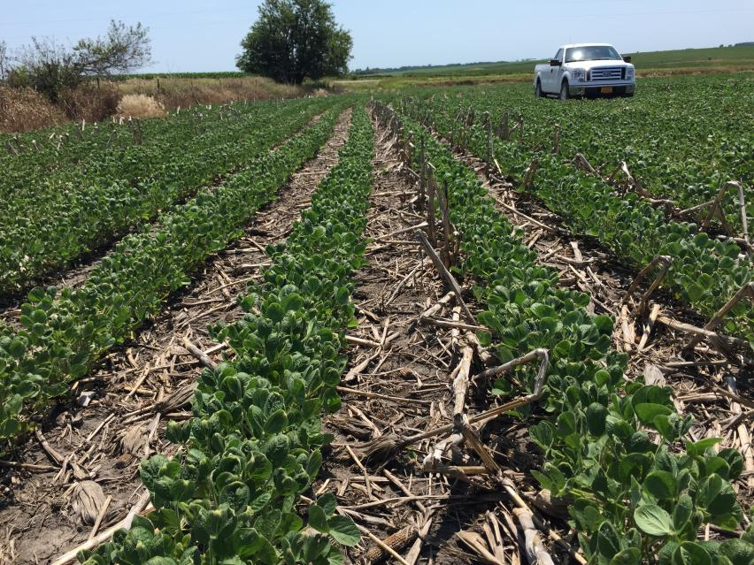 Off-Target Dicamba Injury: The Iowa Experience