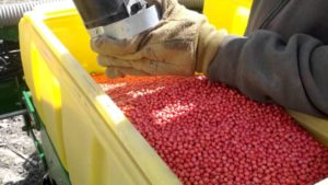 Farmers Brace for What's Next as Soybean Sales to China Tank