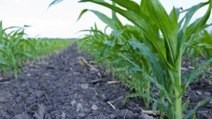 The Importance of Balanced Nutrition for Sustainable Crop Production