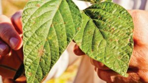 Fungicides 2018: Looking at New Pressures, Including Resistance