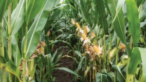 Insecticides: Making the Most of Limited Chemistries