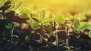 Biological Products Gaining Momentum for Ag Retailers