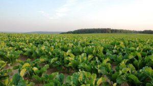 ADAMA Announces OMRI Listing for Mastercop Fungicide