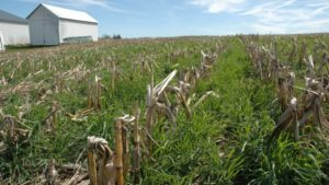 Study: Ag Retailers Seek Greater Cover Crop Adoption Despite Challenges