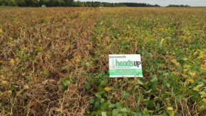 New Seed Treatment: Heads Up®  – A Valuable First Step in Managing White Mold