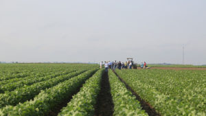 The Verdict on Dicamba, Year Two