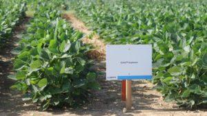Corteva Field Day Addresses Lingering Issues