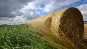 Opinion: Agriculture's European Problem