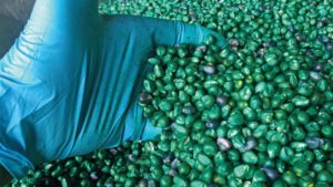 Nutritionals, Corn Seed Treatments Trending Up in a Downstream Market