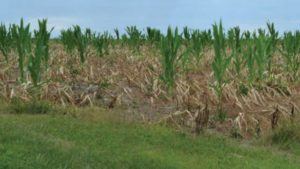 8 Reasons Why Unwanted Herbicide Residues Might Happen