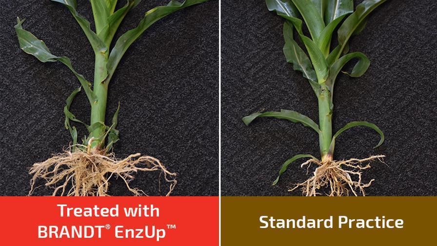 EnzUp-800x450-Corn