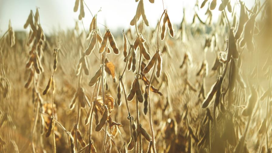 Crop Protection Consolidation Pieces Finally Fall into Place