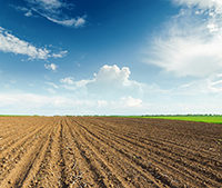 PinnitMax™ nitrogen stabilizer: Your preplant nitrogen volatilization solution