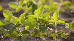 Break Through Yield Barriers By Building Better Plants