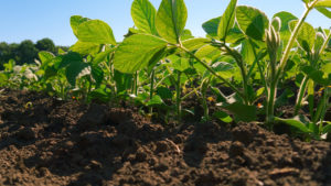 Dicamba Update: Strong in the Residual Game