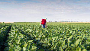 Q&A with Dr. Greg Kruger: A Pragmatic Take on Dicamba Drift