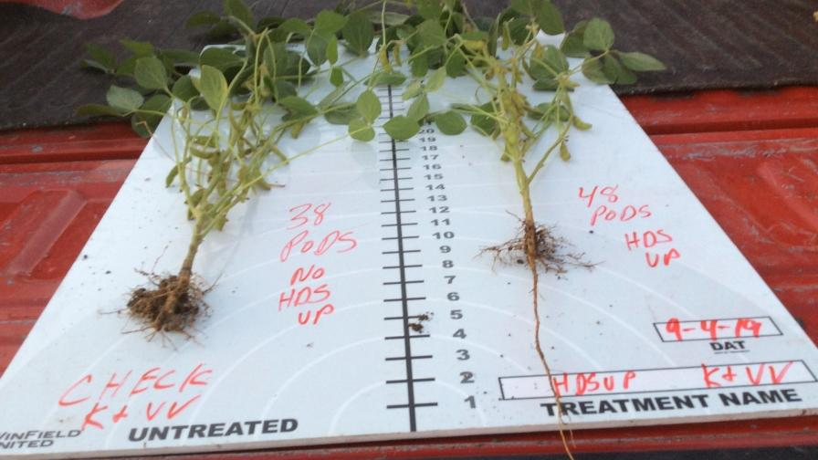 Fungicide/insecticide seed treatment only left vs fungicideinsecticide plus Heads Up Plant Protectant right