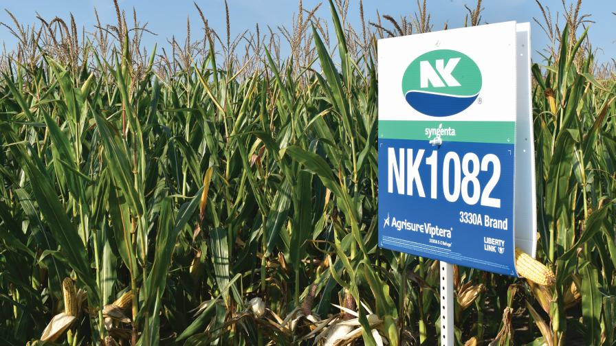 NK1082 Seed Corn field